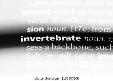 invertebrate word in a dictionary. invertebrate concept.