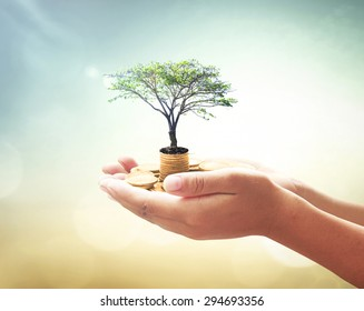 Invest and fund concept. Human hands holding big tree and stacks of golden coins on blurred green nature background