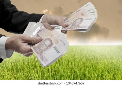 Invest in rice farm concept