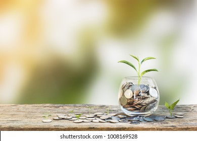Investment concept. Growth plant on coins in clear glass bottle on wooden table with green blurred background and light. Conceptual saving money for growing business and future