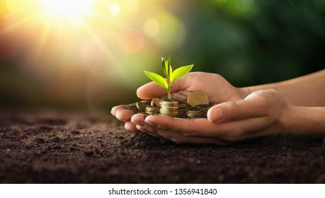 Investment Concept. Plant Growing In Savings Coins Money. Business Development