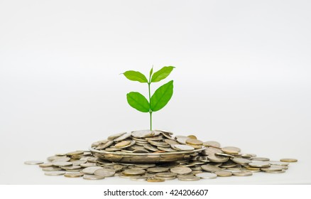 Investment and saving concept. Sprout growing from coins in silver plate on white background.