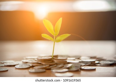 Investment Saving Money Concept. Financial growing plant money  Gold coins stack symbol buy property mortgage money loan with stack of money coin. earning banking symbol financial grow concept.