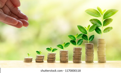 Investment and saving money concept like a growing plant. Investor's drop water to grow plant in pile of coins to get rich and wealth.it is concept of interest and return on investment wallpaper.