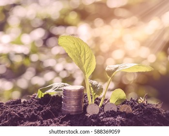 The investment is worth the attention,Green plant grow out of soil and golden coins,investment and saving money concept,retro filter