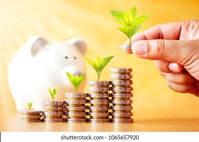 Investor hand hold a coin with plant growing on the top and stack gold coin and piggy bank put on the desk in the office, Turnover of business investment and saving money for growth concept.