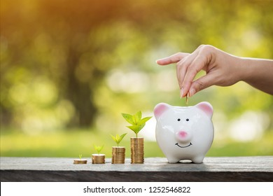 Investor hand hold a gold coin save in the piggy bank and plant growing with savings money on sunlight in the public park, Business investment and economical money concept.