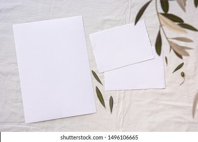 Invitation card mockup, template blank greeting cards, rspv. White textile background, olive branch.