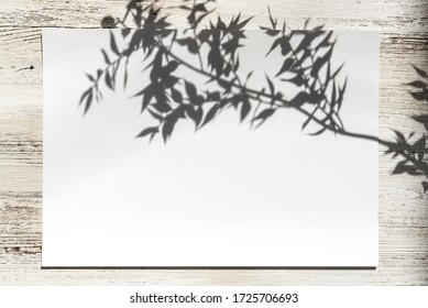 Invitation, postcard, white sheet, with the possibility of inserting your favorite text. Romantic nature theme, country style with reflection of the shadow of a branch.