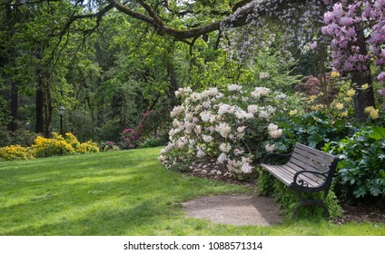 An inviting bench sits in a rhododendron park.