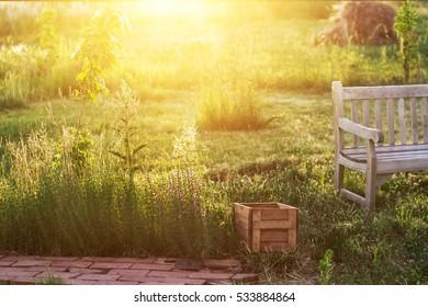 inviting sunny summer evening in the garden