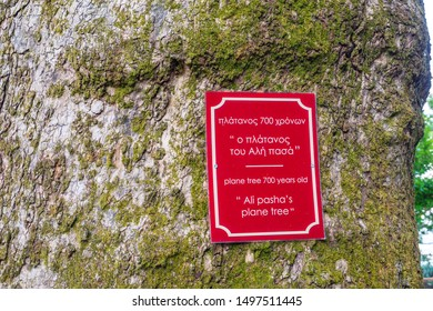 IOANNINA, GREECE - JULY 2019: The 700 years old Ali pasha's perennial plane tree located near the home -  museum of Ali pasha on the Island of Nissi, on Lake Pamvotidha in Ioannina, Epirus, Greece