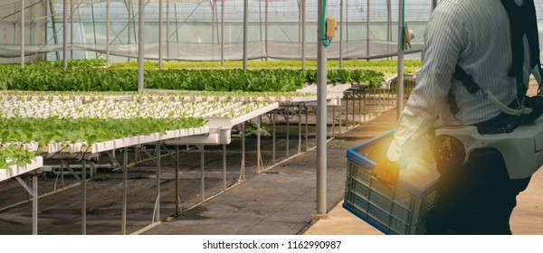 iot smart agriculture industry 4.0 concept. Farmer use artificial robot exoskeleton suit or power-assist suits, designed to help workers lift and carry objects more easily and with less risk of injury