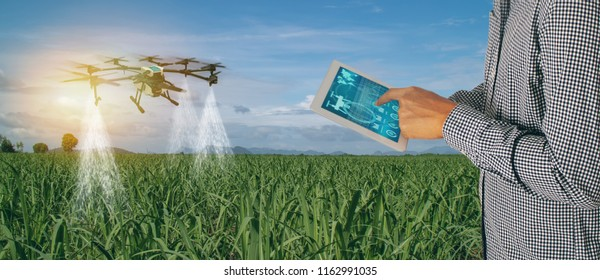 iot smart agriculture industry 4.0 concept,Farmer use  drone (in precision farm) use for spray a water, fertilizer or chemical to the field, farm for growth a yields,crops, control, kill bug or weed