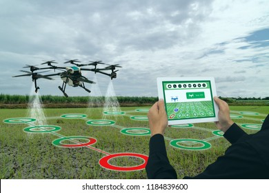 iot smart agriculture industry 4.0 concept,Farmer use  drone (in precision farm) use for spray a water, fertilizer or chemical to the field, farm for growth a yields,crops, use for control, kill the b