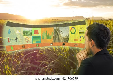 iot,internet of things, agriculture concepts,farmer use augmented reality on screen display to manage, analysis and keep data in the field or farm