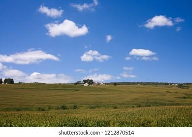 Iowa Corn Field