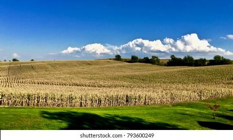 Iowa Landscape in Tama County