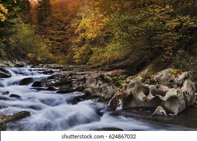 Irati river in Irati forest natural park