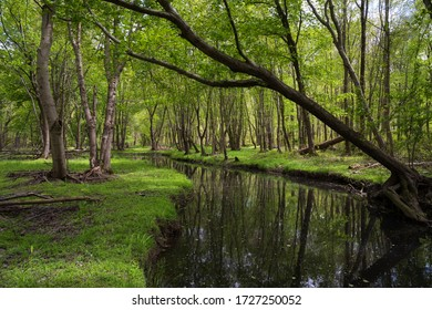 The Ireland Brook running through a wooded area in East Brunswick, New Jersey.