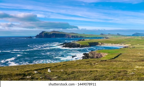 Ireland. Landscape of Dingle Peninsula with cliffs, cows herd and coaster village / General view