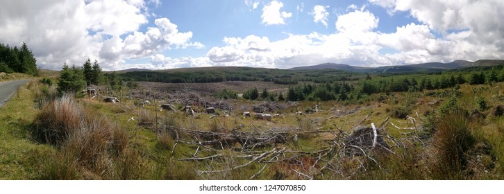 Ireland panoramatic shot of meadow with fallen trees.