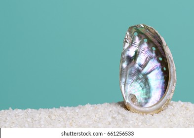 Iridescent abalone shell on white sand on turquoise background. Ormer, Haliotis, sea snail, marine gastropod mollusc. Open spiral structure. Inside nacre surface with respiratory pores. Macro photo.
