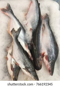 Iridescent shark fish or ikan patin with ice at Malaysia market.