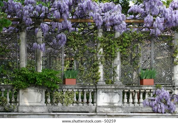 iris balcony