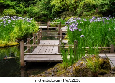 Iris Blooming at the Koi Pond at the Portland Japanese Garden During Summer at the Portland Japanese Garden in Portland, Oregon in Forest Park.