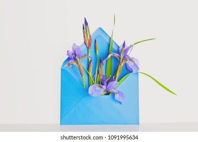 iris in envelope on the dark background - best wishes