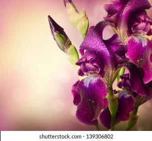 Iris Flowers Art Design. Beautiful Violet Flower With Water Drops. Border with Copy Space