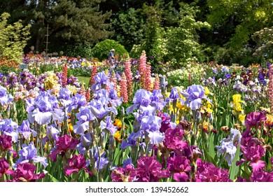 Iris Garden in the Willamette Valley