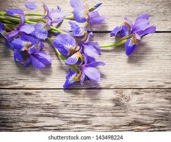 iris on wooden background
