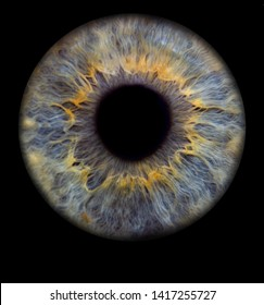 In the iris we find the signs of our personality