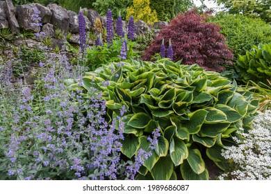 Irish cottage garden in summer