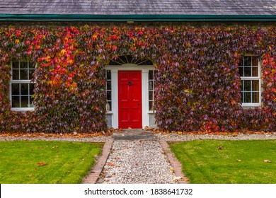 Irish cottage with red door covered in Virginia creepy Ivy in Autumn
