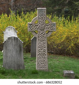 Irish cross headstone, forsythia in the background