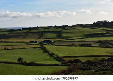 Irish field sunny