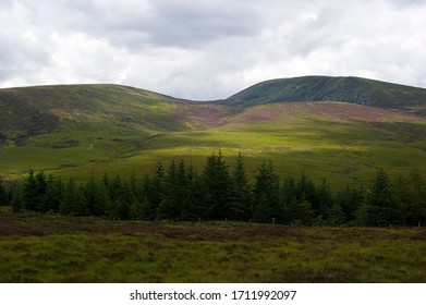 Irish hills filled with purple flowering heather in the summertime, Wicklow park