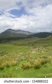 Irish meadow.