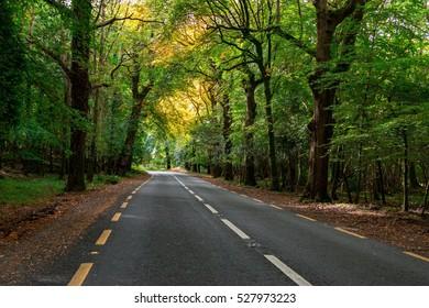 The Irish Road Near Killarney