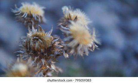 Irish Thistle closing for winter