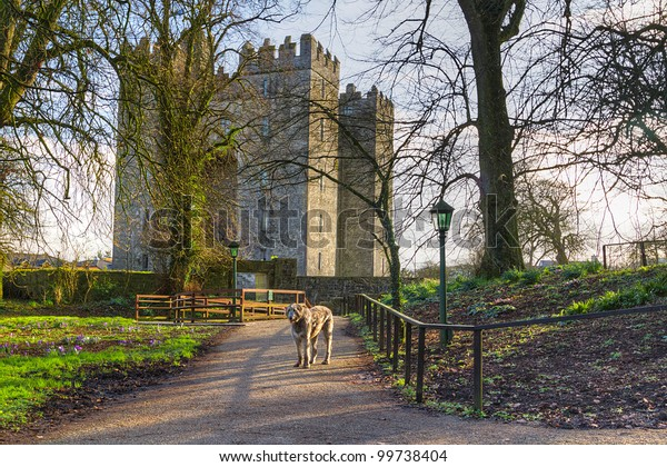 Irish wolfhound at Bunratty castle, Co. Clare, Ireland
