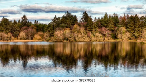 Irish Woodland Scene, Hillsborough Forest Park, County Down, Northern Ireland.