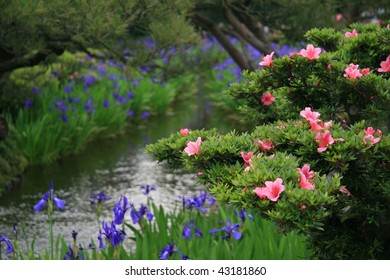 Iris's and Azaleas by a stream in Japan