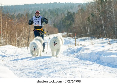 Irkutsk, Russia - January 28, 2017: Racing competition for dog sledding and skijoring Angara beads 2017.