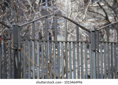 iron fence on the background of trees