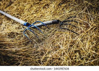 iron forks lie on the hay