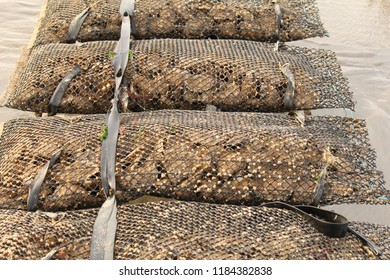 iron oyster bags with oysters that are maturing at oyster beds in the sea at the french coast in villers-sur-mer in normandy